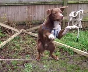 The balance dog