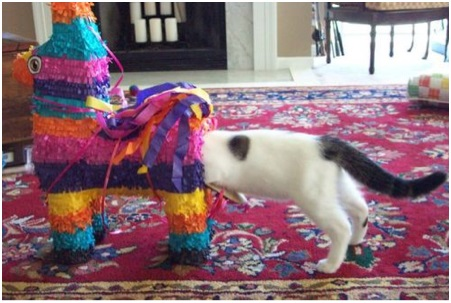 How's this for intelligent?  A piñata cat.
